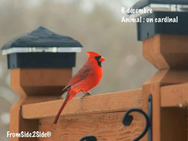 D fi photo de no l premi re semaine fromside2side for Fenetre a cardinal