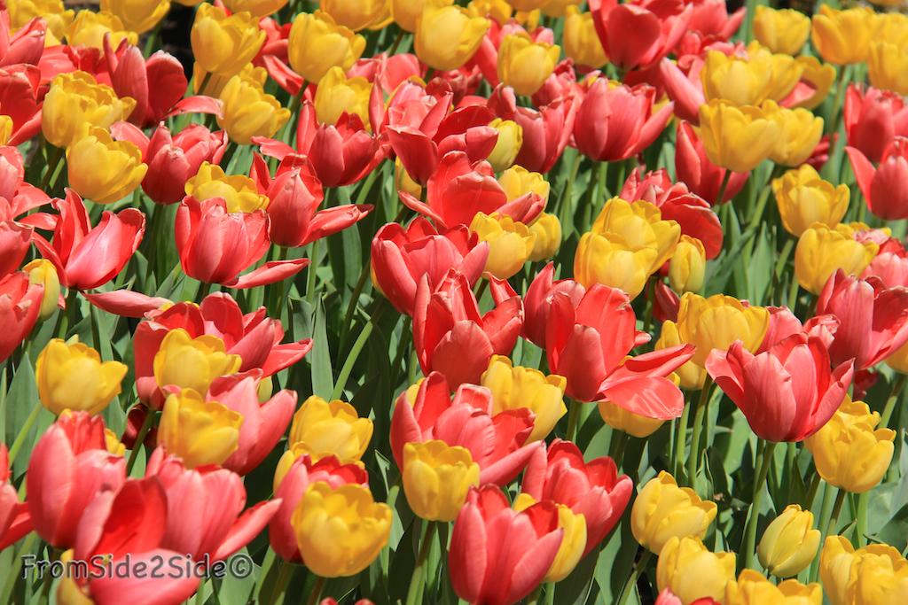 printemps 8