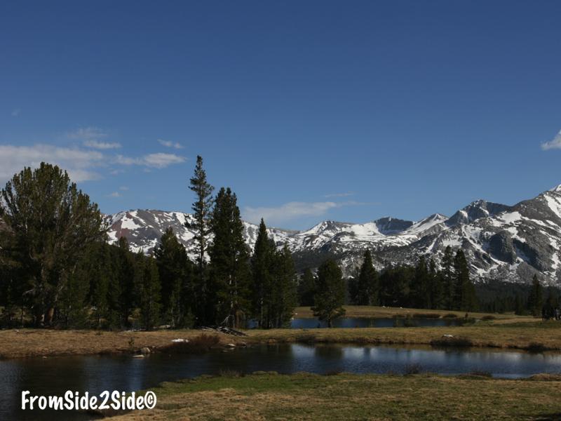 Tioga pass - Tuolumne Meadow