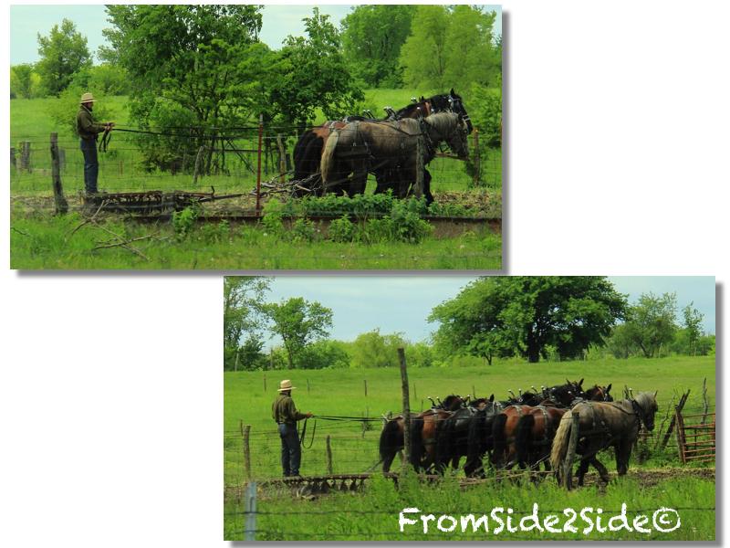 Bons baisers du pays Amish …  8 cartes postales pour comprendre les Amish